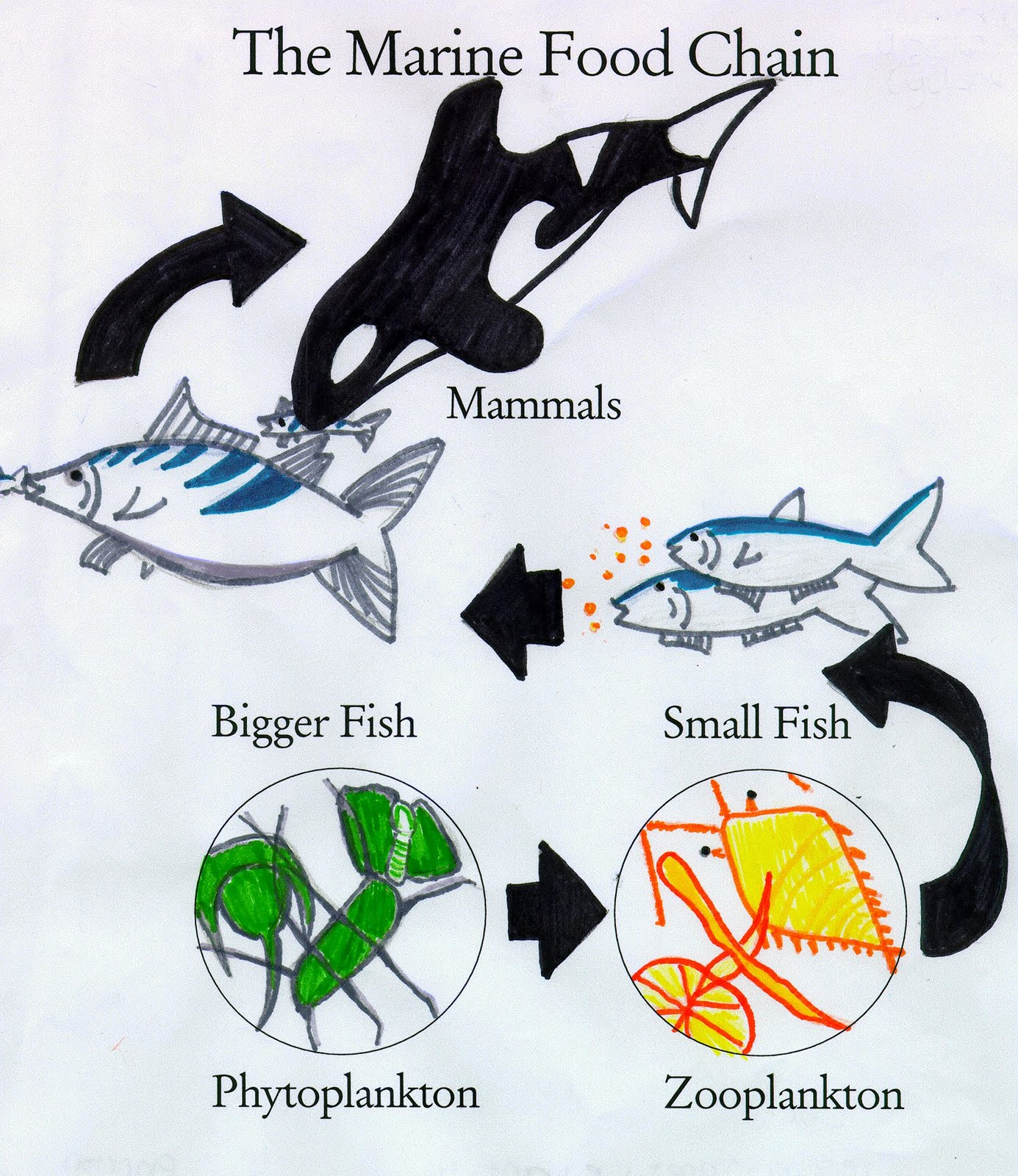Natural interconnection of creatures that forms a kind of food chain